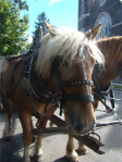 Horse-drawn carriage tours of Remington sites in the Village
